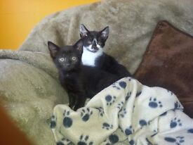 Three kittens for sale