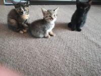 5 beautiful fluffy kittens