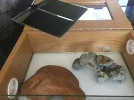 **Starter Vivarium for young or small snake**