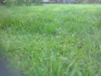CV LAWN & GRASS CUTTING SERVICE