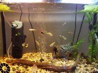 Offers plese, full FISH tank setup