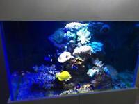 Complete Reef Aquarium - 90G including sump. H 5Ft x W 3Ft x D 2Ft