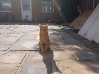 Ginger cat Looking for Loving Home *
