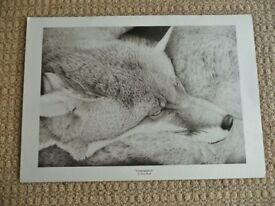 Black and White Piezo Art Print of an Original Fox Pencil Drawing Animal Picture Gift Idea