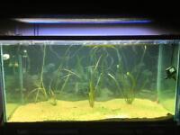 90 gallon aquarium w/ T5 lighting and iron stand must go