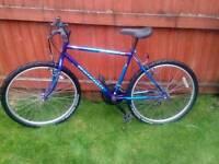 Adult mountain bike Raleigh sabre