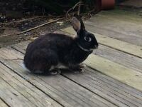 Male and female bonded pair of rabbits