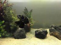 Fish tank 200l