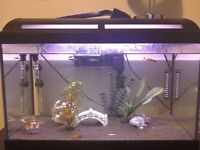 2ft fish tank and accessories