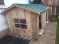 dog box house shed kennel