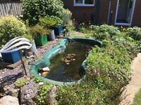 Preformed pond, pump and filter