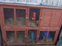 2 guinea pigs, large hutch, 2 indoor hutches
