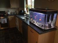 140 litre Fluval Fish Tank