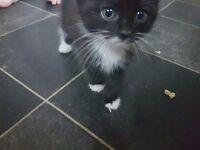Black and white kittens