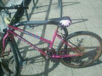 Ladies apollo pulse mountain bike