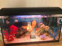 Fish tank + fish & accesories