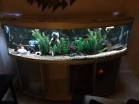 Aquatlantis Evasion full setup with fish and lots of equipment