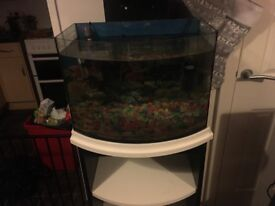 Full tank set up for tropical fish