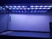 200 Litre fish tank, cabinet, LED lights, heater, internal filter and more