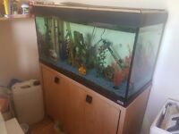 200 litre cold water tropical fish tank for sale.