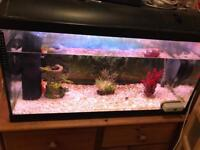 Tank with 3 fancy gold fish