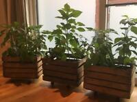 3 vintage wooden crates plus 3 moving tray