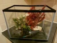 Beginner's Fish Tank Set