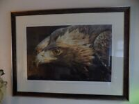 EXTRA LARGE GLASS FRAMED PICTURE OF EAGLES HEAD SIGNED 43 X34 INS