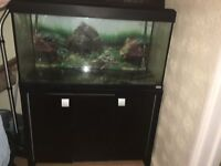 Fluval Roma 200 Fish Tank +cabinet and external Filter