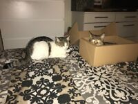 2 beautiful Cats to give to a loving home