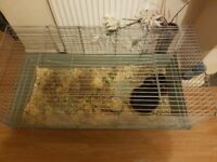 Rabbit with large indoor cage