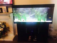 Jewel fish tank and unit