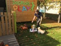 DOG CRECHE BUSINESS FOR SALE