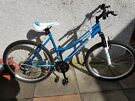 Young Adults Bike  (New and never used)