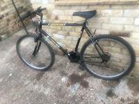 Assagai Lion men's bike 26inch wheels 18 gears