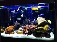 Full malawi setup in a stunning fluval tank. Approx 30 fish plus all equip needed. Reluctant sale.