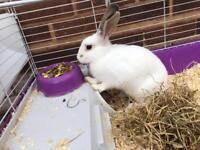 Lovely rabbit for £15.00