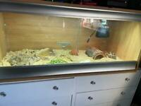 Tortoise & set up