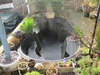 pre formed Fish Pond