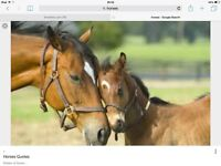 Horses stables DIY livery grazing electricity water mobberley cheshire