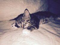 Lovely kitten girl
