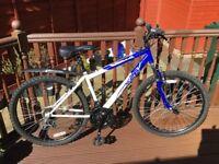 Adults Appolo Bike For Sale