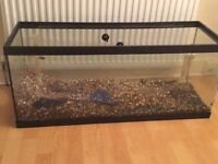 3ft tank with under gravel filter