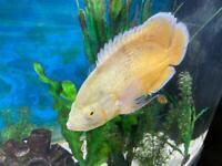 Tropical fish & pond fish
