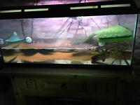 3ft marina aquarium 2 terrapins