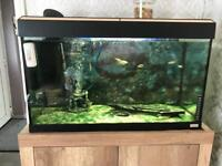 Large Fish Tank/Aquarium
