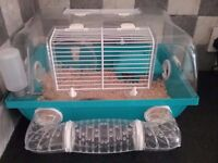Dwarf hamster with cage for good caring person