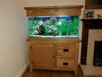 Beautiful oak fish tank
