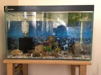 Fish with aquarium tank plus accessories