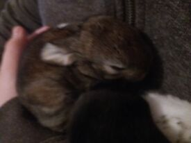 5 month old baby rabbits for sale